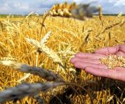 Ukraine will gather the second largest crop in modern history