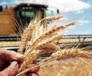 Agrarian business in Ukraine: global challenges and the role of economic science