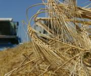 Agricultural production in Ukraine fell by 2.3%