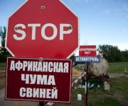 The virus of ASF was recorded on the territory of the Kaliningrad region