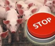 An outbreak of African swine fever in a pig farm of a private entrepreneur of the Kustynska village council of the Rivne district