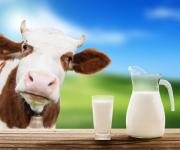 Processors switch to milk produced on farms
