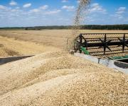 Volume of agricultural production will decrease by 2.6% in 2017