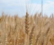 The production of agricultural products in Ukraine has risen in price by 22%