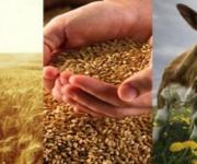 Agriculture can be an impetus to the economic growth of Ukraine