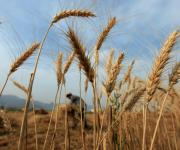 Lviv region allocated 23 million UAH to support agrarians