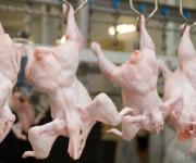 Export of Ukrainian chicken rose by 40% in January-February