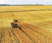 Cabinet proposes to transfer to farmers 500 thousand hectares of agricultural land