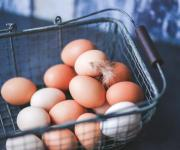 Israeli mission is to assess the system of state control over the production of eggs in Ukraine