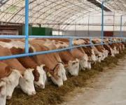 220.1 million UAH will be allocated to compensate for the cost of construction and reconstruction of livestock farms