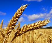 Agricultural production increased by 36.4% in Ukraine