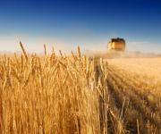 Ukrainian agricultural co-operatives produce 1% of all agricultural products