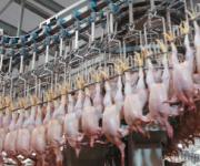 Ukraine has increased poultry meat exports to the EU by 80%