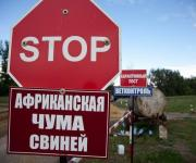 ASF: new cases in the Kyiv and Mykolaiv regions