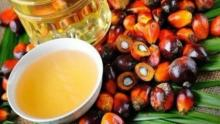Parliament supported the idea of imposing a tax on imports of palm oil