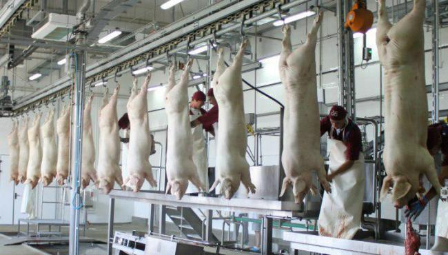 The number of slaughterhouses in two years decreased by almost 10%